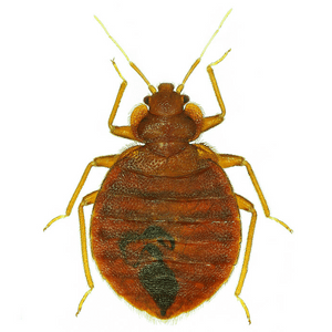 Bed Bug Control icon Cleveland, OH.