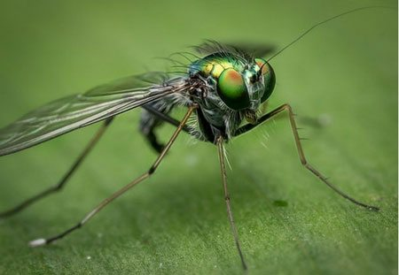 fly home services- Lakewood Exterminating in Cleveland, OH.