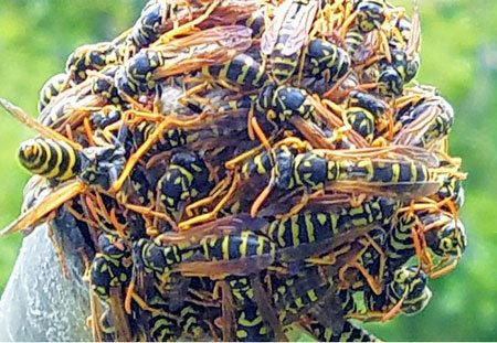stinging insect home services.